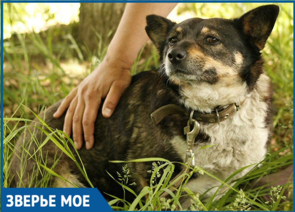 Милая собака Матрёна из Ставрополя ищет дом