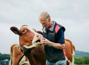 «Ставка на коров»: серьезно нарастить производство молока намерены в Ставропольском крае