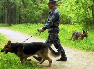 Пропавший на Ставрополье 9-летний мальчик мирно спал в лесополосе