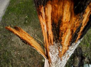 Сухое дерево обвалилось на крышу детского сада в Кисловодске