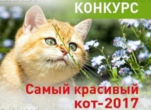 Объявляем о старте голосования в конкурсе «Самый красивый кот-2017»