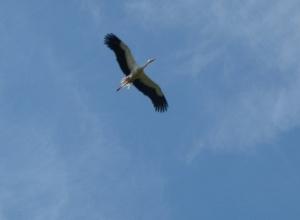 Редкую для Ставрополья птицу заметили в Невинномысске местные жители