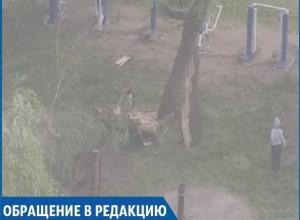 «Сильный ветер снёс дерево на детской площадке, а коммунальщикам до этого нет дела», - житель Ставрополя