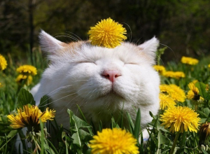 Солнечная безветренная погода ждет жителей Ставрополя в начале новой недели