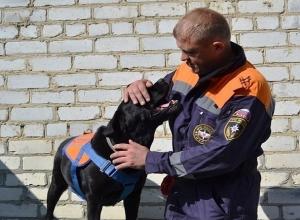 Спасатель-кинолог из Ставрополя признан лучшим на всероссийском фестивале
