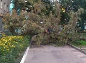 Огромное дерево переломало позвонки 11-летней девочки в Лермонтове