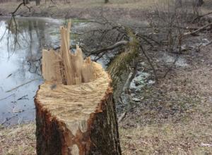 Вандалы вырубили деревья в заповедной зоне Ставрополя