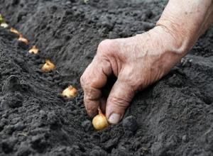 Более 300 килограммов лука украл у соседа жадный селянин на Ставрополье