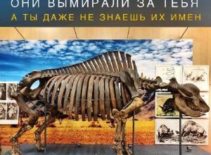 Имя «унисекс» уникальному носорогу предложили придумать жителям Ставрополя