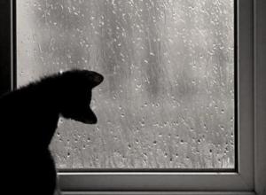 Дождливый и туманный день ожидается во вторник на Ставрополье