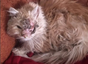 Изуродованного кота вместе со строительным мусором выкинули мужчина и женщина в Ставрополе