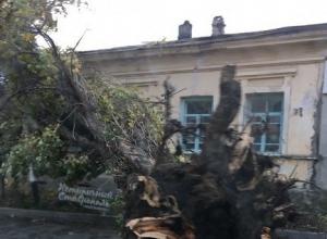 Ураганный ветер вырывает огромные деревья с корнями и сносит крыши в Ставрополе