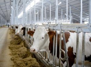 Молочный комплекс за миллиард рублей построят в Ставропольском крае