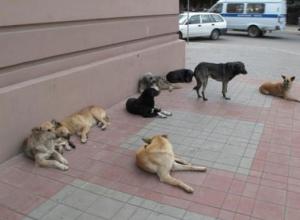 Письмо в редакцию: бродячие собаки пугают жителей улицы Морозова