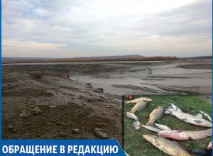 Экологическая катастрофа: тонны рыб погибают из-за сброса воды в канале на Ставрополье