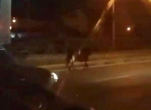 Одинокая лошадь в потоке машин на дороге Ставрополя попала на видео