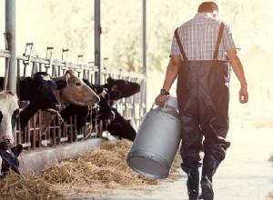 Ставропольские фермеры получили более 500 миллионов рублей на развитие