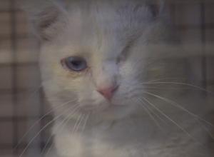 «Друзей не нужно покупать»: как живет ставропольский приют для животных