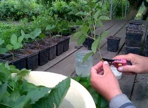Клубнику, малину и чернику будут выращивать в крупной теплице на Ставрополье