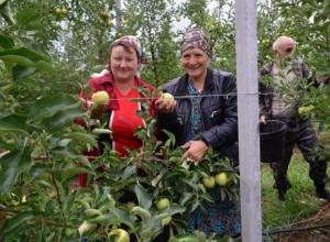 Дополнительные деньги на развитие суперинтенсивных садов выделит ставропольское правительство
