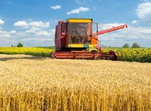 Исторический рекорд по сбору зерна побили аграрии Ставрополья