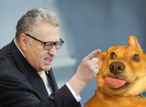 Ставропольские ЛДПРовцы открестились от собак после предупреждения Жириновского