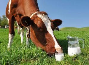 Масштабная молочная ферма на 4500 голов появится на Ставрополье
