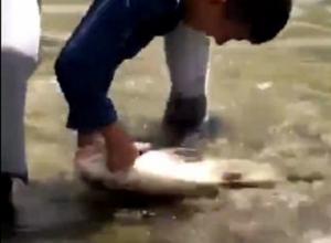 Появилось видео ловли школьником пятикилограммового толстолобика в Комсомольском пруду в Ставрополе