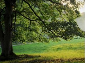 Власти Ставрополя пообещали не допустить варварскую вырубку 10 тысяч деревьев в Юго-Западном районе