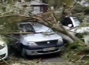 Упавшие деревья смяли около десятка автомобилей на дворовой парковке в Ставрополе