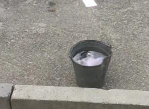 Утопленный в ведре с водой котенок в центре Ставрополя шокировал прохожих