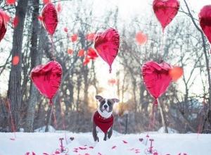 Туман и тепло ждут жителей Ставрополя на День всех влюбленных