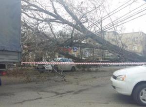 В Ставрополе на улице Голенева на «Форд» упало огромное дерево