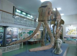 Загадка ставропольских слонов: кого нашли археологи в городской черте Ставрополя