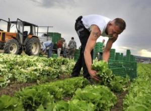 Фермерам стало сложнее получить субсидии в Ставропольском крае