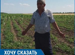 «На протяжении десяти лет отара овец с соседней кошары истребляет посевы на моём поле», - житель Ставрополья