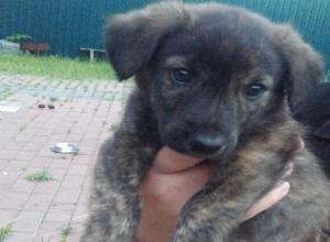 В Ставрополе ищут новых хозяев осиротевшим щенкам