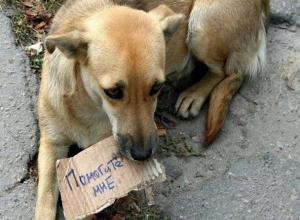Введение штрафов за кормление бездомных животных прокомментировали ставропольские зоозащитники