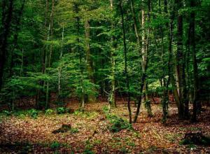 Незаконную постройку снесли в Таманском лесу Ставрополя