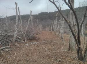 Только отгремел скандал с вырубкой леса в нарзанной зоне, как власти Кисловодска отдали на растерзание еще полтора гектара, - эколог-общественник