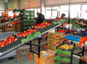 На закладку сада и строительство нового оптового центра потратят 4 миллиарда рублей в Ставропольском крае