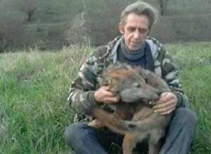 Домашнего волка Малыша продает житель Ставрополья