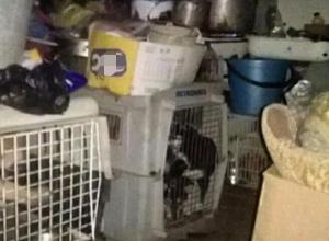 В ужасных условиях погибают породистые собаки у заводчицы в Железноводске