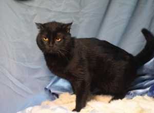 Полуживого кота с химическими ожогами нашли в Ставрополе