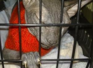 «Горячие» слухи о скандальном аресте кота за долги хозяина опровергли судебные приставы Ставрополья