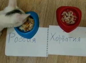 Ставропольский кот предсказал победу России в четвертьфинале ЧМ-2018