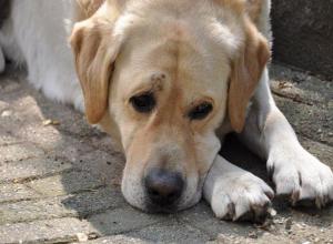 Провалившуюся в холодный коллектор собаку спасли на Ставрополье