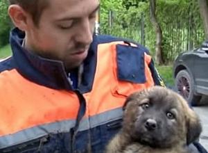 Спасатели Кисловодска смогли достать щенка из люка спустя три дня