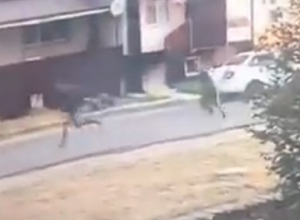 Два хулигана разбили стекло припаркованной машины и попали на видео под Ставрополем