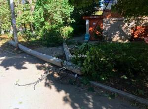 Дерево рухнуло вместе со столбами на улице в Ставрополе